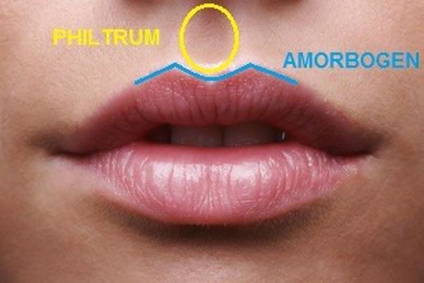 Die Konturierung der Lippen  - Dr. Huschek